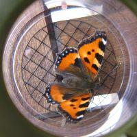Biodiversität und Monitoring